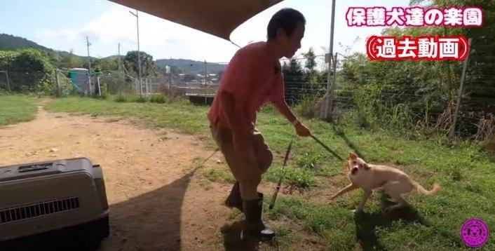 【野犬保護】怯え暴れていた野犬『鼓太郎』必死で人を信じようとする姿に感涙