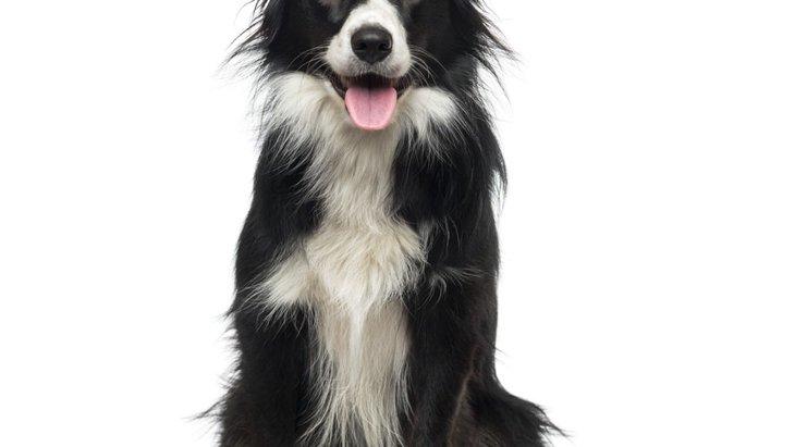 賢いと言われている犬種5選