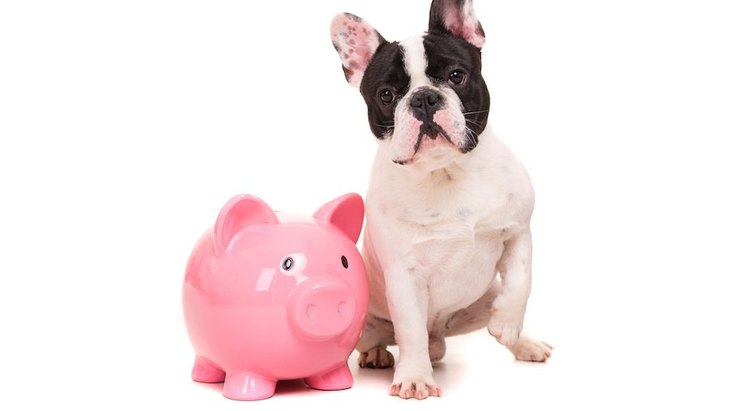 ブルドッグの値段!相場や子犬の価格が変わる理由について