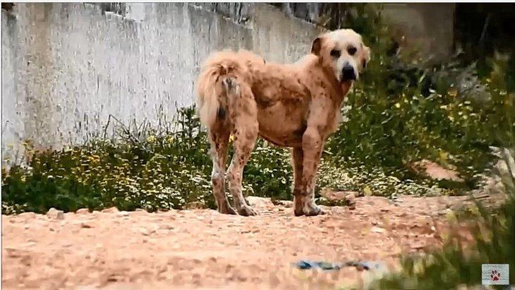 放浪する犬、すべてを諦めたようなその姿に涙