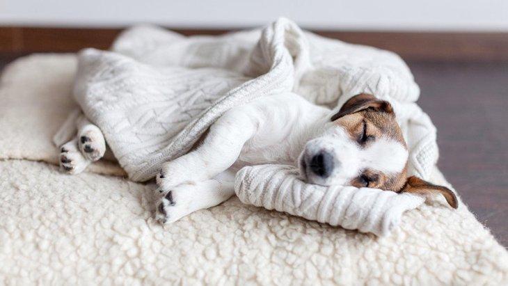 犬のベッドを洗う時にしないほうがいいNG行為5選