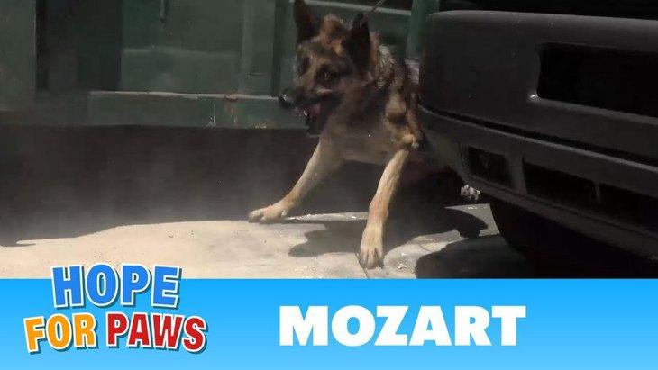 通行人にもビクビク…神経質になった犬の保護。実は柔和な甘えん坊だった!