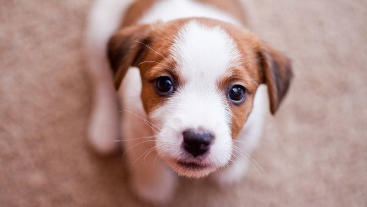 愛犬に絶対言ってはいけない『最悪ワード』3つ