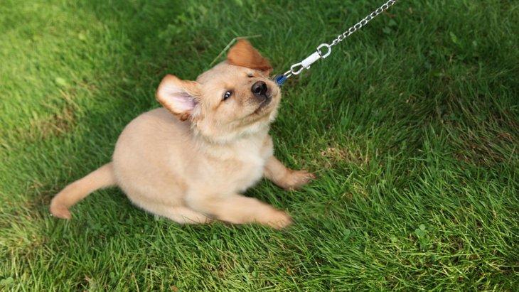 犬が散歩を嫌がる!行きたくない時の仕草や原因