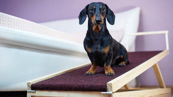 犬の『腰痛サイン』7つ