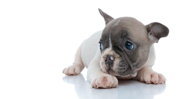 犬が『飼い主に怯えてる』ときに考えている3つのこと
