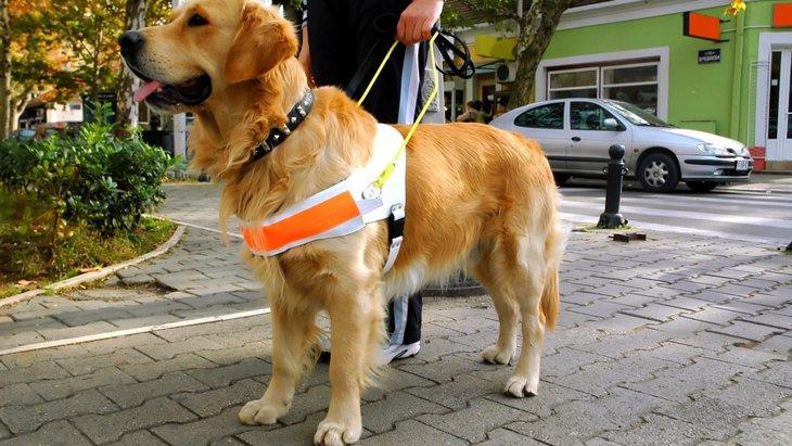 街で『聴導犬』に出会ったら絶対にしてはいけない事
