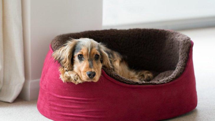 犬が快適に過ごせない『ベッドの共通点』3選