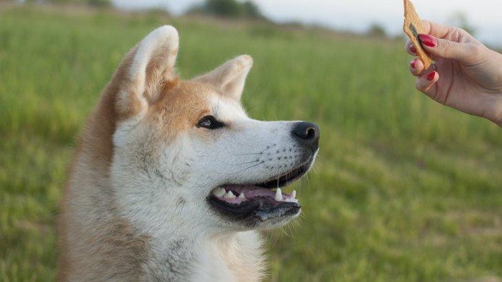 犬の飼い主にとってありがた迷惑な周囲の行動3つ