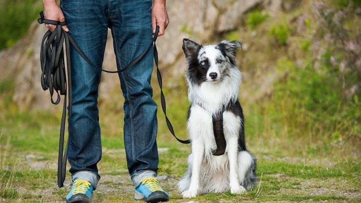 犬のしつけで一番重要なコマンドはどれ?覚えてないと事故に繋がる可能性も!