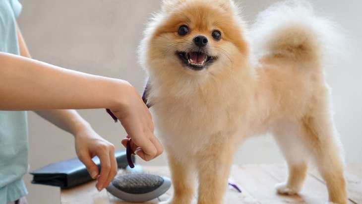 犬の毛をカットしすぎると危険な理由5つ