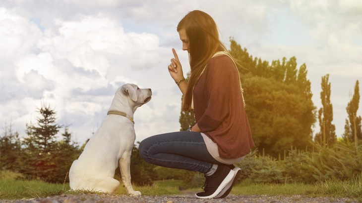 犬のしつけは何を覚えさせればいいの?最低限教えたいコマンド