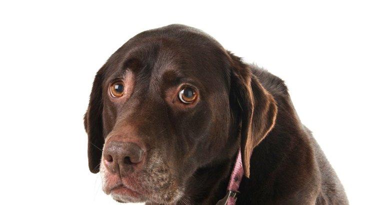 『自信が無い犬』がよくする行動4選!どうやったら自信をつけられるの?