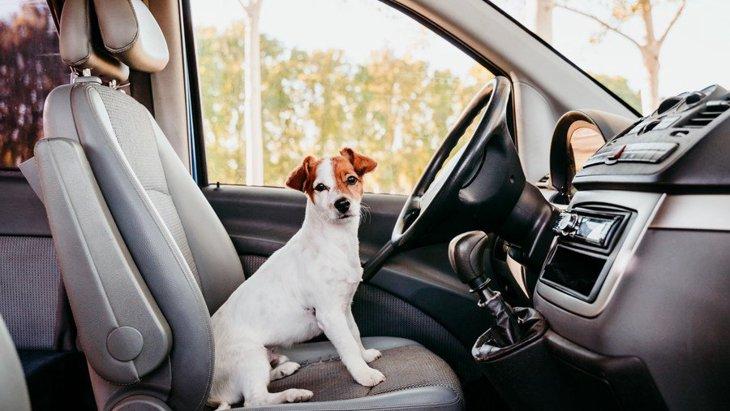 犬と人とのつながりを人と自動車の関係に応用できるだろうかという研究