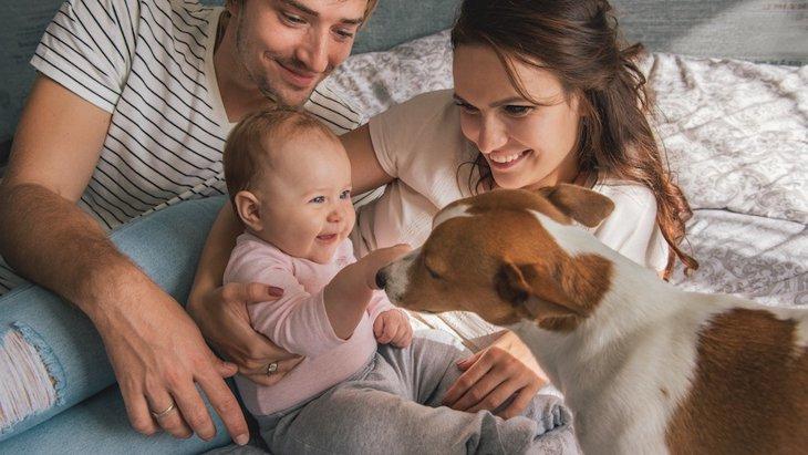 犬はどんな基準で「好きな人」を決めているのか?