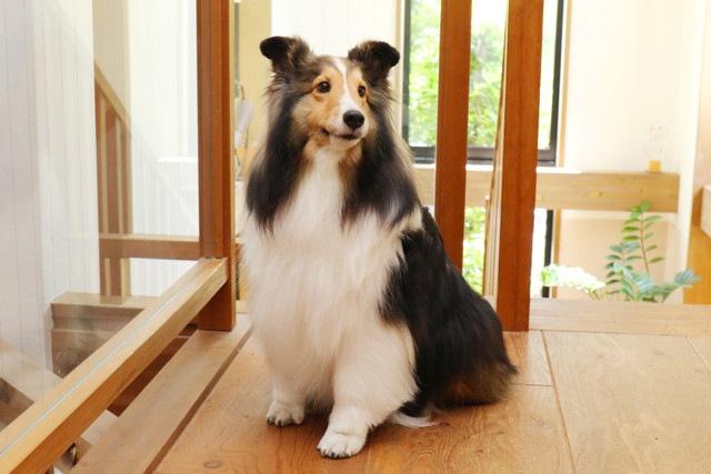 犬の保護ボランティアの活動内容とは?