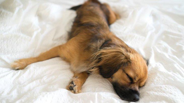 犬が寝ている時にピクピク動く理由3選!病気の可能性はあるの?