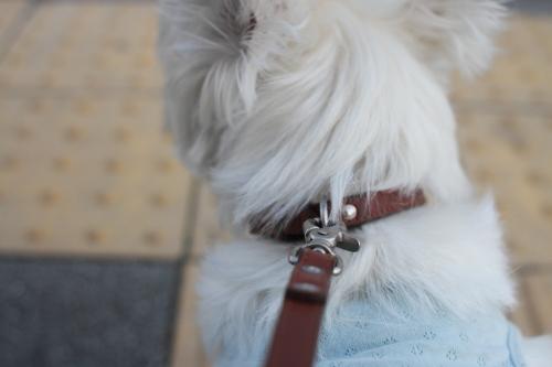 犬を保護したら やらなければいけない事と注意点