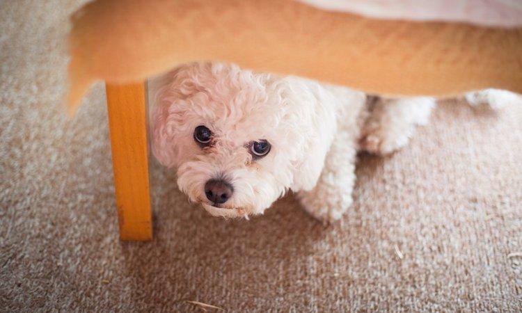 犬が弱気になっているときにする4つの仕草や行動