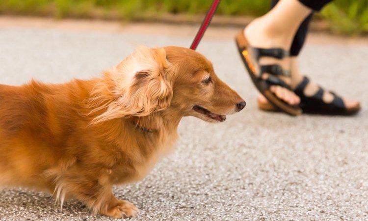 冬場に多い犬の関節炎の症状と対策