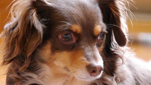 ミックス犬の種類!人気の15選