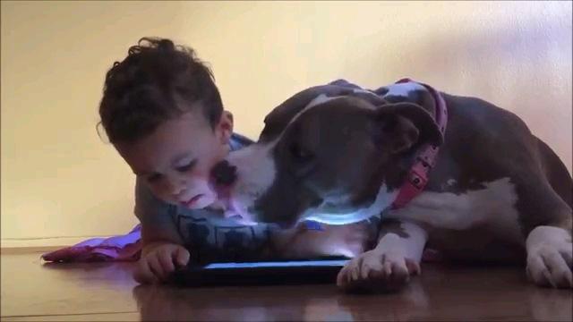 構ってだワン!iPadに夢中な男の子に甘えるワンちゃん