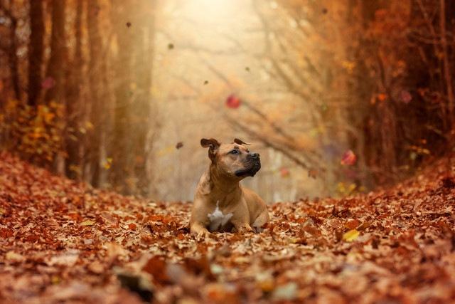 シェルターで「誰の目にも見えていない透明な犬」と呼ばれた犬とは…