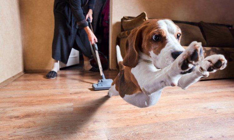 犬が驚いたときに見せる5つの仕草や行動