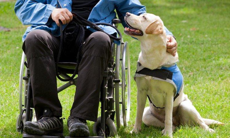 「身体障碍者補助犬」の仕事内容と人に与える効果