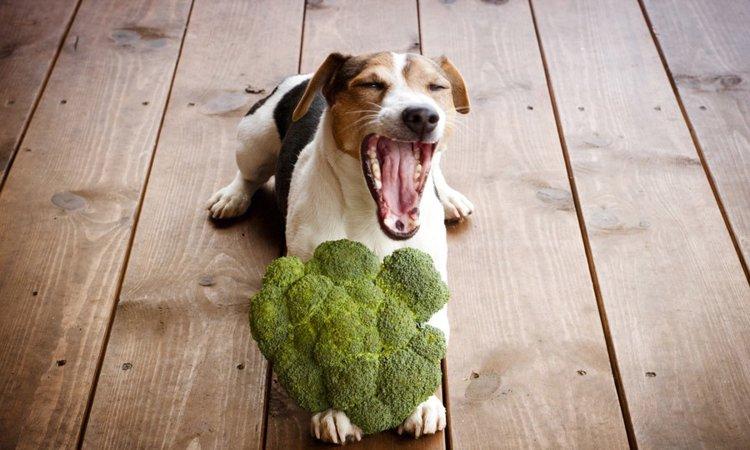 犬が食べても大丈夫な冬の食材4選