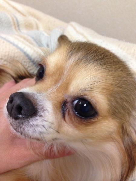 犬の目やにと病気の関係!適切なケアと治療法