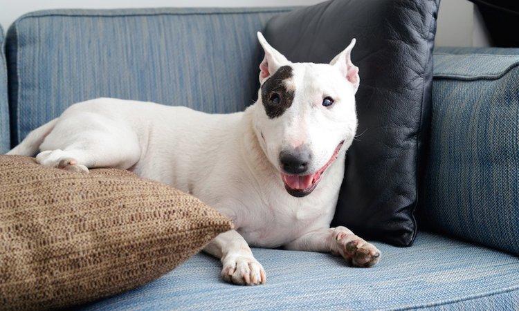 室内で暮らす犬達の、真夏を乗り切る5つの工夫