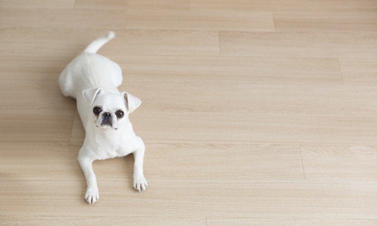 犬が遠くから飼い主を見ている時の心理4つ