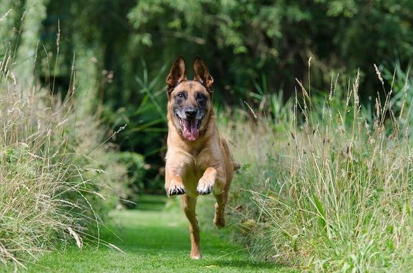 愛犬が突然の逃走!命を守るためのトレーニングとは?