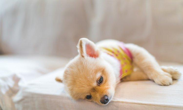 犬のストレス要因となる人間の行動5選