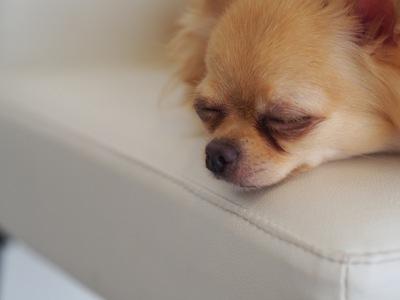 犬の心疾患について~症状・原因から治療・予防法まで~