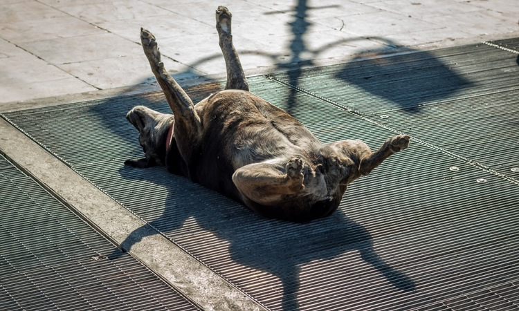 犬はなぜ日向ぼっこが好きなの?