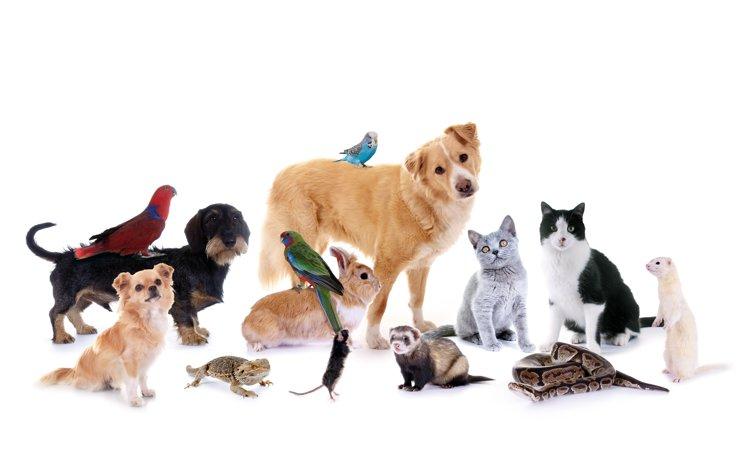 犬と相性の良い動物は?