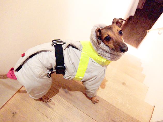 犬の夜のお散歩は危険!交通事故防止にとにかく目立つ格好で!