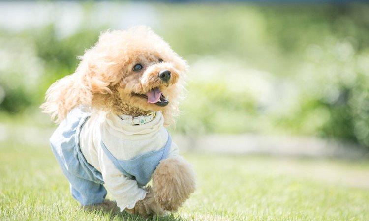 飼い主が感じる犬の健気なところ8選