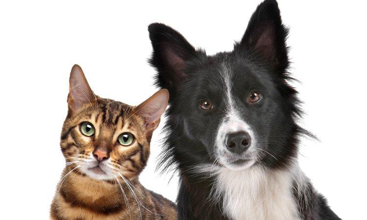 過去最高!犬・猫の長寿化について、飼い主が考えること、準備すること