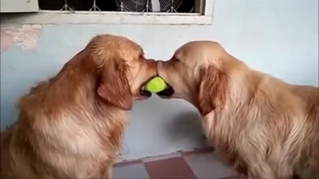 犬の喧嘩仲裁!微笑ましいワンコ動画まとめ