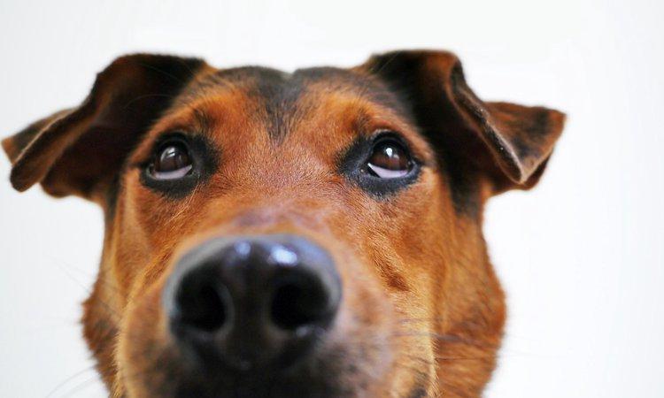 【嬉しい?ストレス?】犬がくしゃみするときってどんな気持ち?