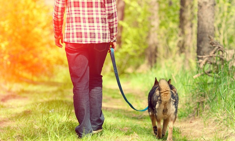 犬の後ろ足の震えの原因について 考えられる病気や対処法など