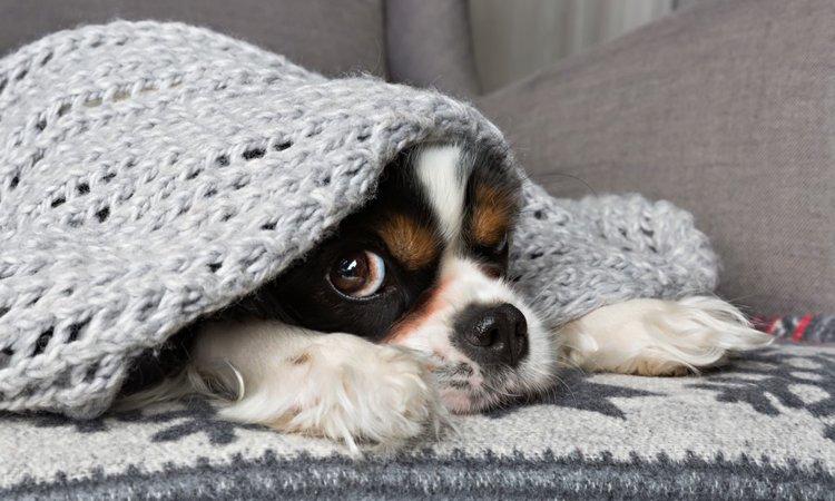 犬が真冬に体調を崩してしまう3つの原因と予防策