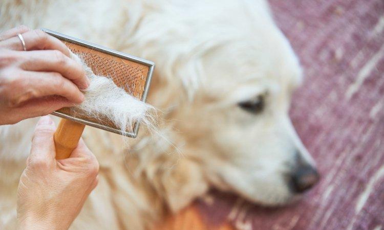 犬の毛を掃除するコツ!とっておきのアイデア8選