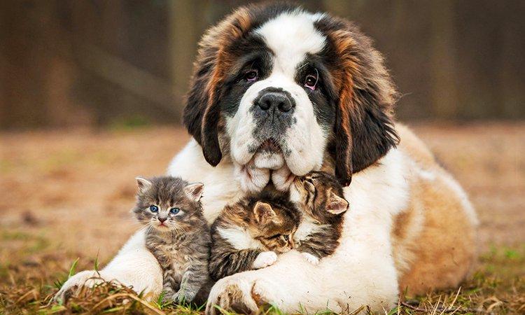 犬の保険に入っているか
