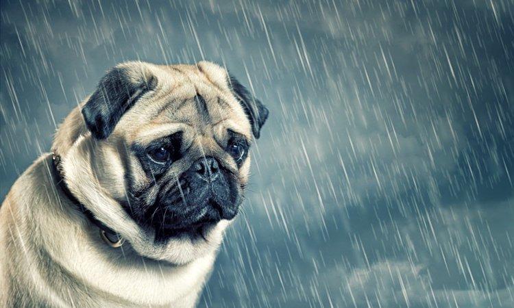 犬の心を傷つける5つのNG行為