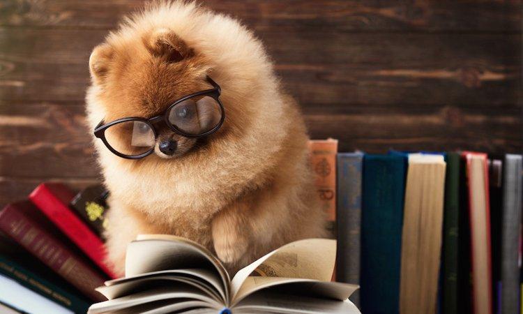 犬の「飼い主検定」を受けるにはどうしたらいいの?
