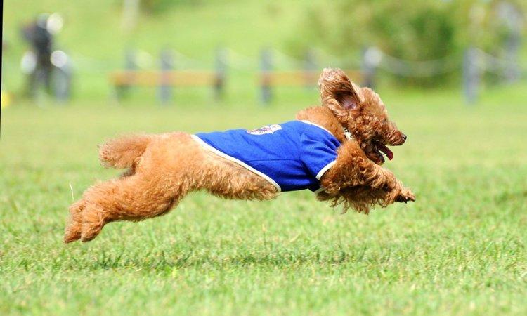 犬の社会化にドッグランは効果的?